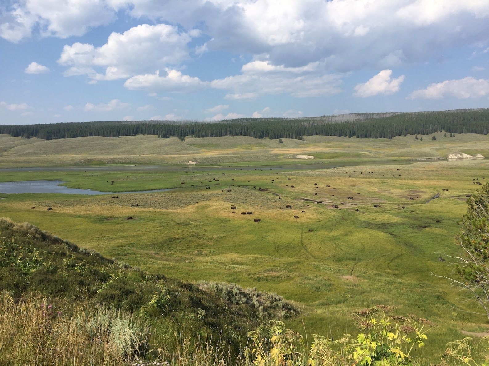 Exploring Wildlife in Yellowstone & Grand Teton National Park